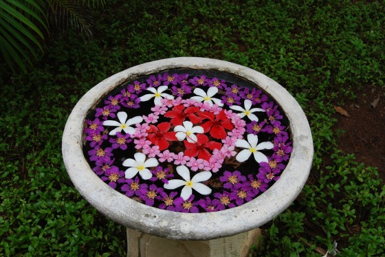 Blumemarrangement - Malediven