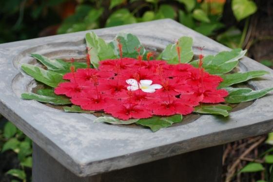 Blumen im Spa