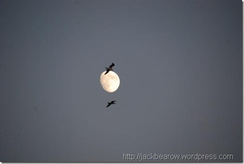 Mond Moewen